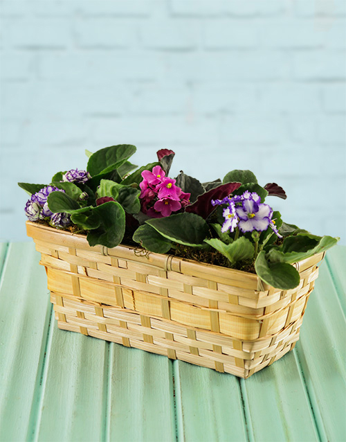 colour: African Violets in a Basket!