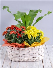 Picture of Mix of Flowering Plants in a Basket!