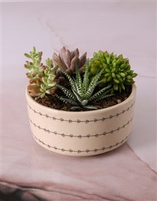 plants: Cacti and Succulents in Heart Leaf Bowl!