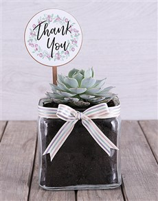 gifts: Thank You Succulent in Square Vase!
