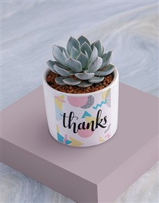 gifts: Thanks Succulent In White Ceramic Pot!