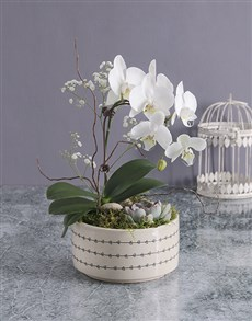 gifts: Midi Orchid Garden In A Pot!