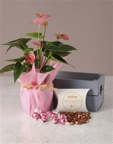 gifts: Pink Anthurium Gourmet Crate!