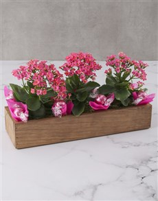 gifts: Kalanchoe Flowers In A Wooden Crate!