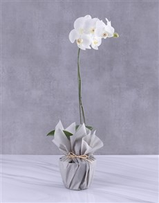 gifts: Moon Dust Orchid Flower!