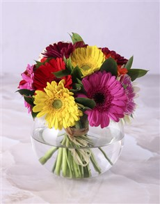 gifts: Gerbera Daisies in a Small Bowl Vase!